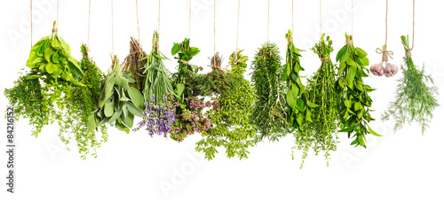 Kitchen herbs hanging isolated on white. Food ingredients #84216152