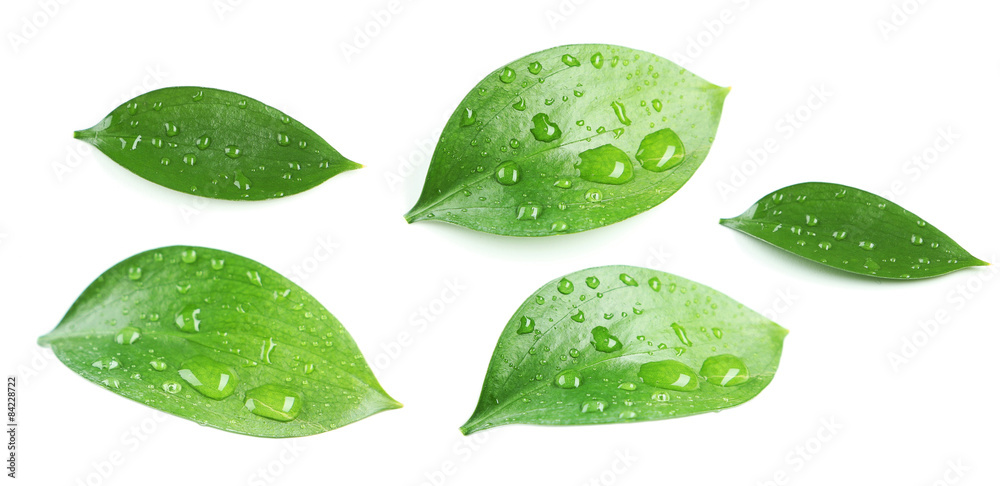 Fototapety, obrazy: Beautiful green leave isolated on white