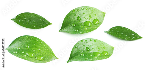 Fotografia Beautiful green leave isolated on white