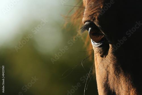 oko-konia