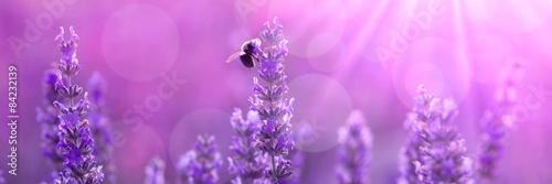 Foto op Canvas Lavendel Bee on lavender