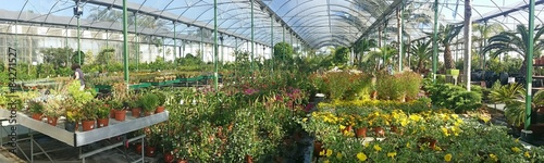 Canvas-taulu Plantación