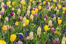 Mélange De Tulipes, Jacinthes...