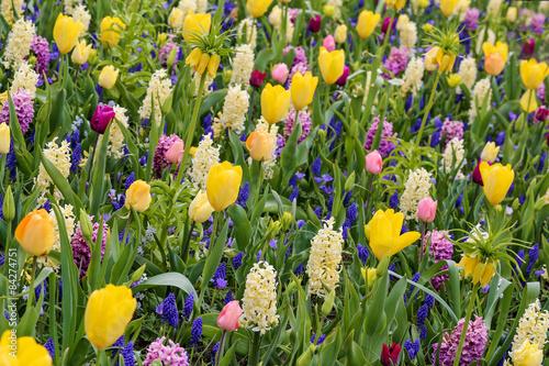 mélange de tulipes, jacinthes, muscari et fritillaria imperialis Canvas Print