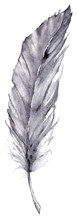 Watercolor Vector Feather Isolated