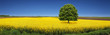 canvas print picture - Rapsfeld Sommer Panorama