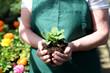 canvas print picture - Gärtnerin hält Jungpflanze im Gartenbaubetrieb in Händen