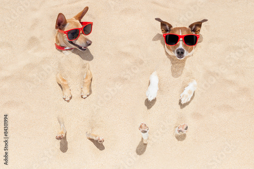 Photo  couple of dogs buried in sand