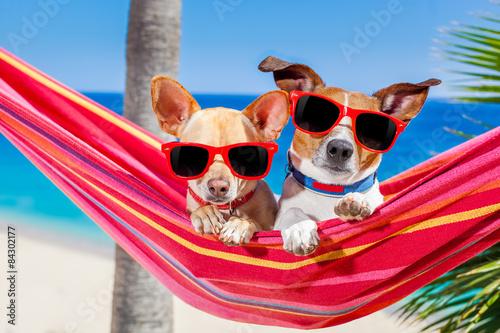 Fotografering  dogs summer hammock