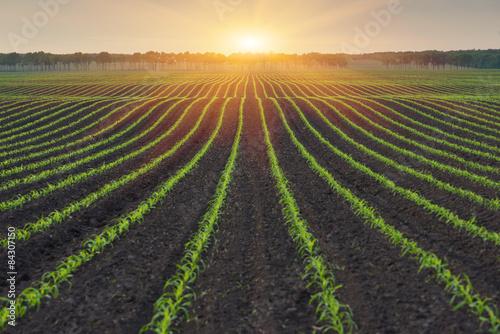 Foto op Aluminium Platteland Rural landscape