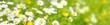 Blumenwiese - hochauflösendes Panorama