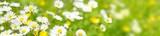 Fototapeta Fototapety z naturą - Blumenwiese - hochauflösendes Panorama