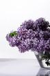 flower, fresh, fruit, sambucus, season, flower,