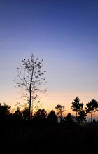 Sunrise Loie