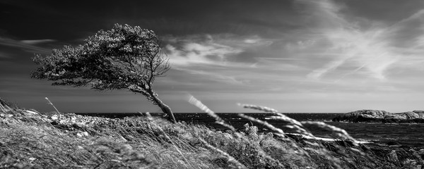 Obraz Lonely tree in black and white