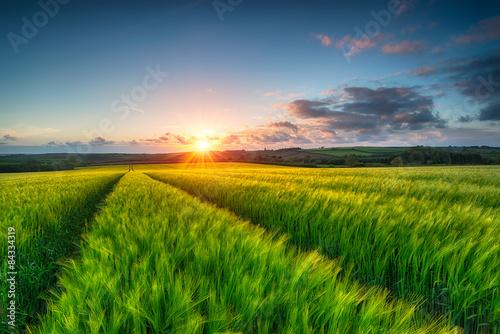 Foto op Aluminium Platteland Barley Field Landscape