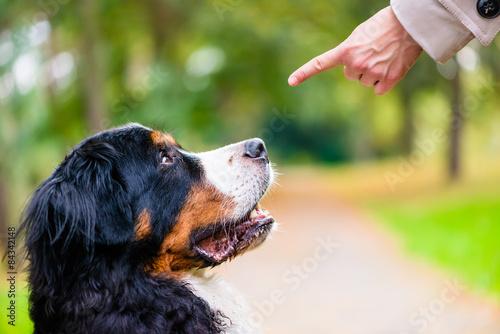 Fotografía  Frau mit Hund Formación beim übt Kommando