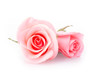 canvas print picture - pink rose flower on white background