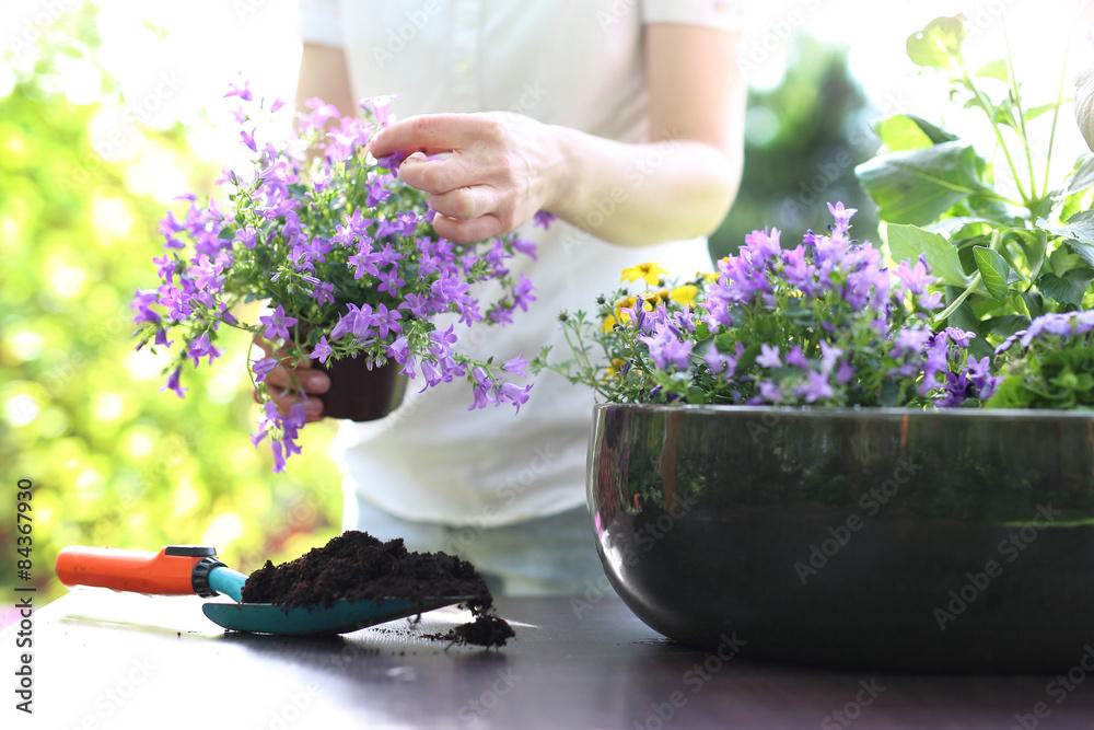 Fototapeta Mój piękny ogród - obraz na płótnie