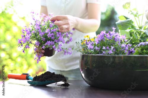 Mój piękny ogród - 84367930