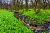 Rzeczka w lesie wiosną