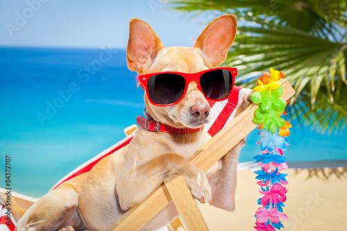 Fotografering  dog summer holiday vacation
