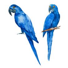 Nice Watercolor Blue Parrots