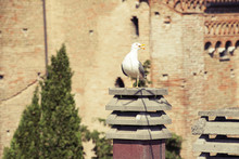 Seagull On The Chimneypot