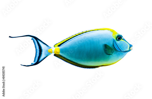 Poster Sous-marin tropical fish