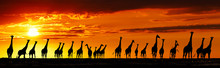 Giraffes Silhouettes At Sunset