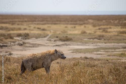 Photo  Serengeti Hyena