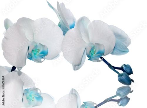Fototapeta turkusowe orchidee