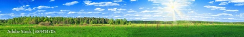 Foto op Plexiglas Groene summer forest panoramic