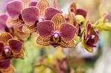Piękne orchidee na gałęzi