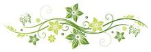 Frühlings- Und Sommerblumen