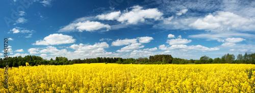 Foto op Aluminium Oranje Rapeseed field panorama with beautiul sky