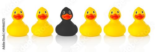 Carta da parati Black rubber duck in a row of yellow rubber ducks