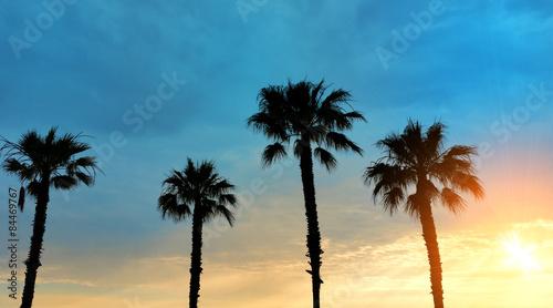 Papiers peints Palmier Palm trees sunset