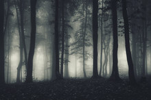 Dark Forest Landscape At Night