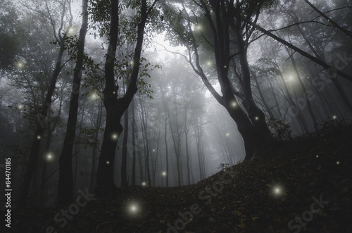 Fototapeten Wald mysterious magical lights sparkling in fantasy forest at night