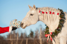 White Horse With Christmas Wre...