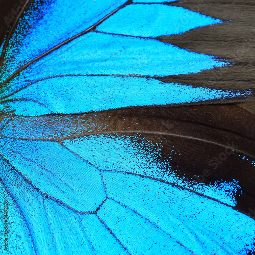 blue butterfly wing - 84492126