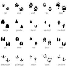 Vector Set Of 20 Animal Footprints Icon