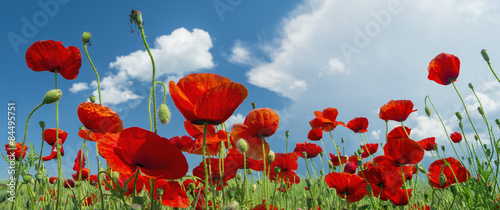 Tuinposter Poppy red poppy and clouds