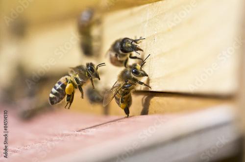 Plakat Honigbiene