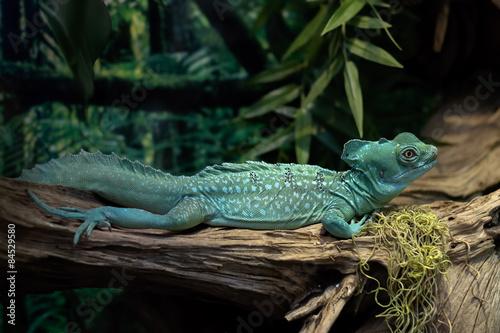 Photo Green lizard on a tree branch.