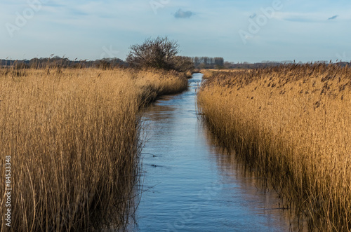 Canvas Print Water filled drainage dyke edged with Norfolk reeds under a blue