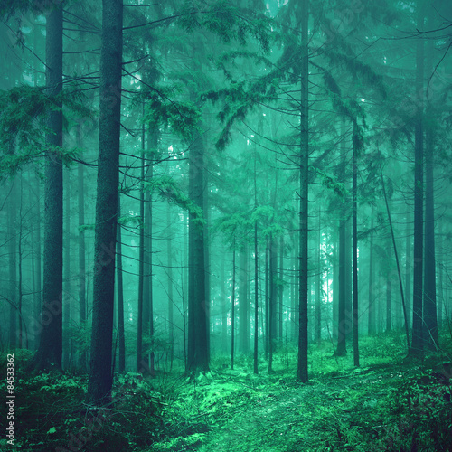 Fototapeten Wald Magical green colored foggy fairytale forest