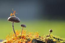 Ant On Mushroom