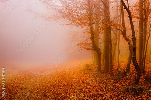 Tematy naklejek na wymiar droga-przez-las-jesienia